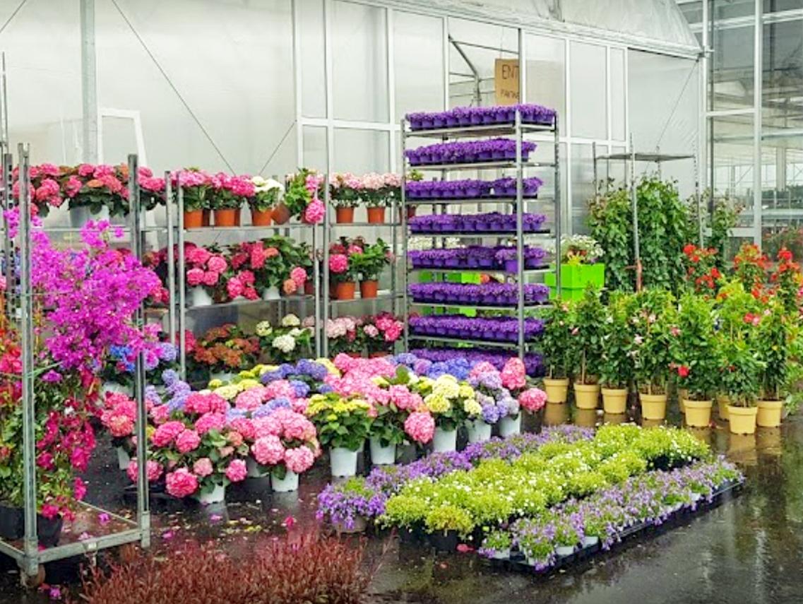 garden ghisa fiori